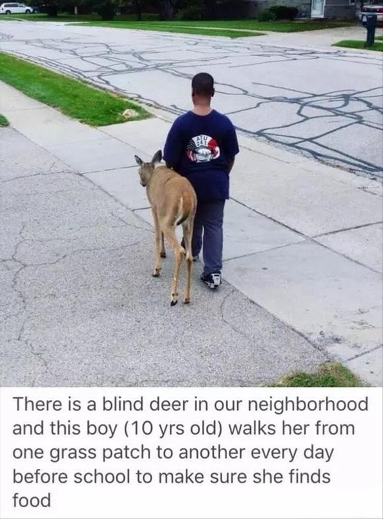 Dog - There is a blind deer in our neighborhood and this boy (10 yrs old) walks her from one grass patch to another every day before school to make sure she finds food