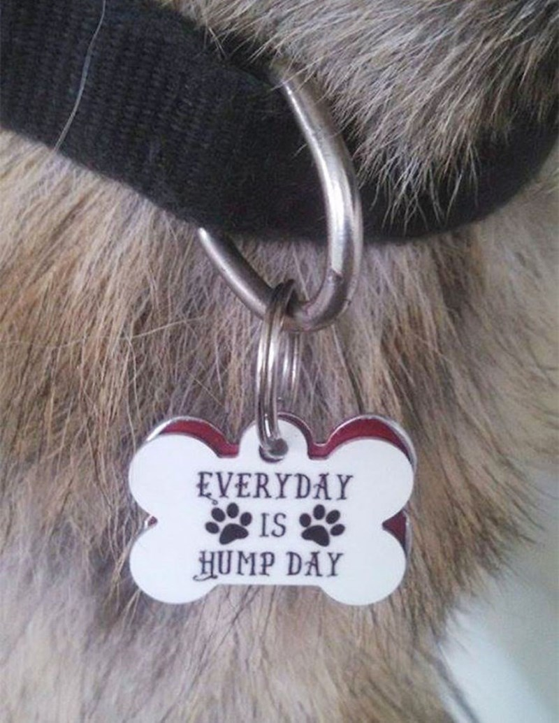 Fur - EVERYDAY IS HUMP DAY