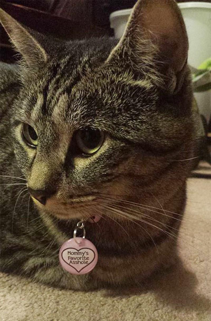 Cat - Mominy's Favorite Asshole