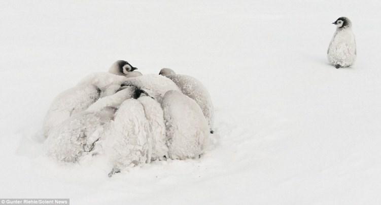 Snow - Gunter Riehle/Solent News