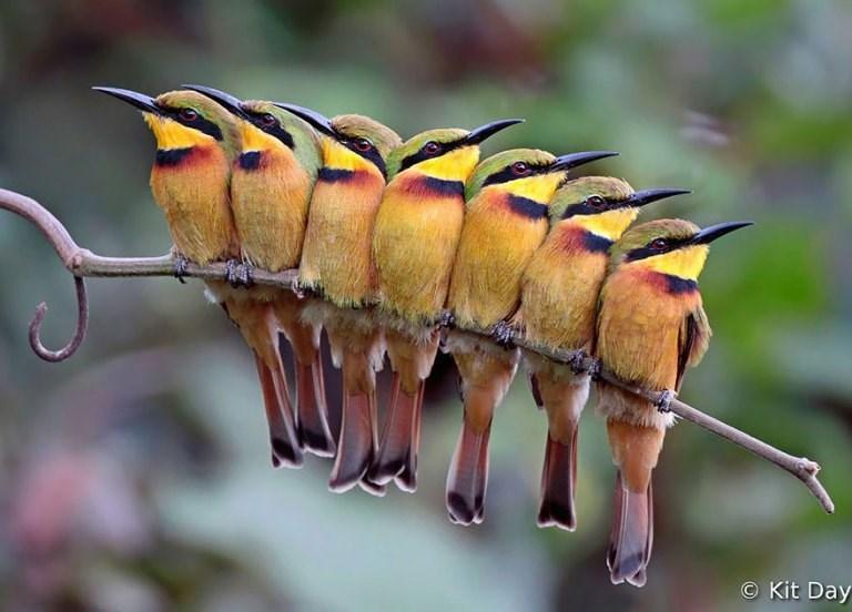 Bird - O Kit Day