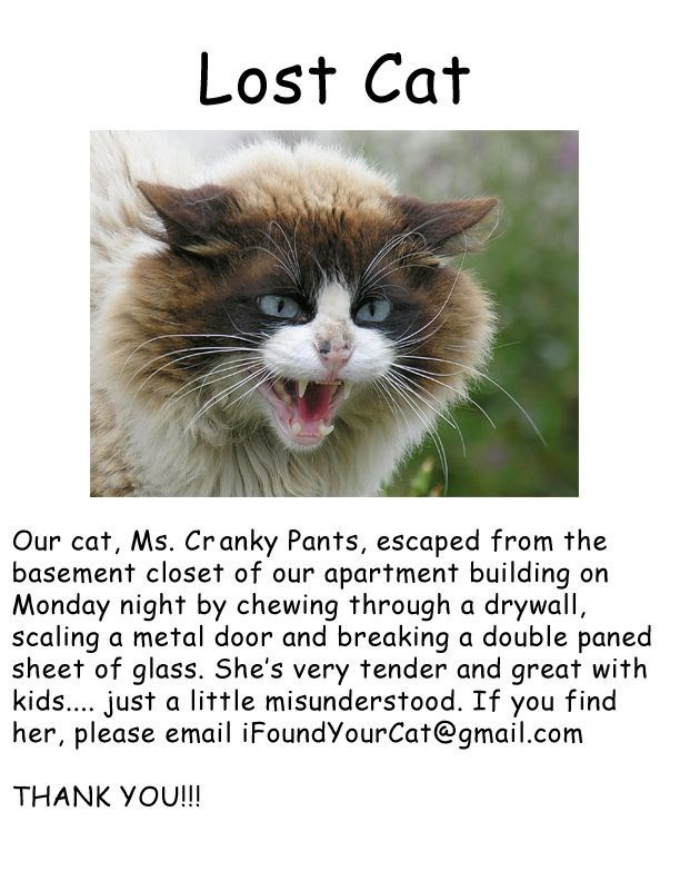 missing cat looking for Ms. Cranky Pants who escaped from her home