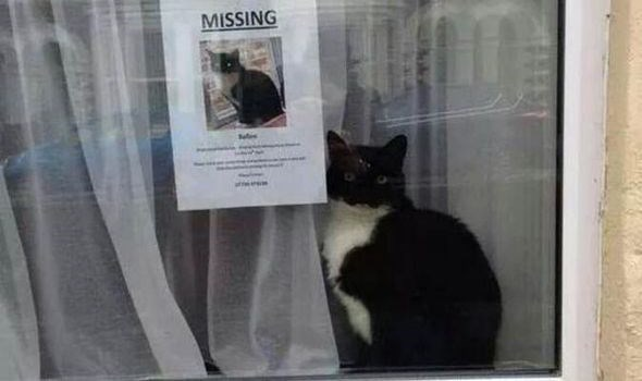 missing cat sign and the cat that is missing sitting next to it