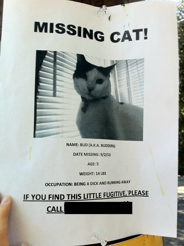 missing cat sign looking for a 'little fugitive'