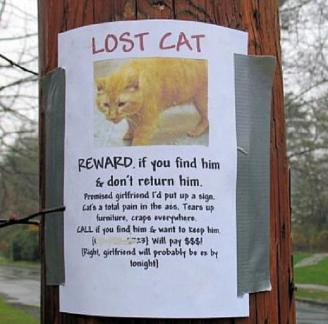 lost cat sign saying that if the cat is found they can keep him