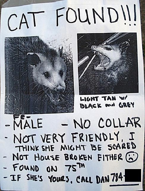 cat found sign with a picture that is not a cat