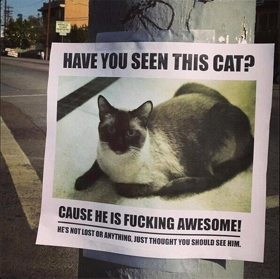 cat sign posted because how cool the cat is
