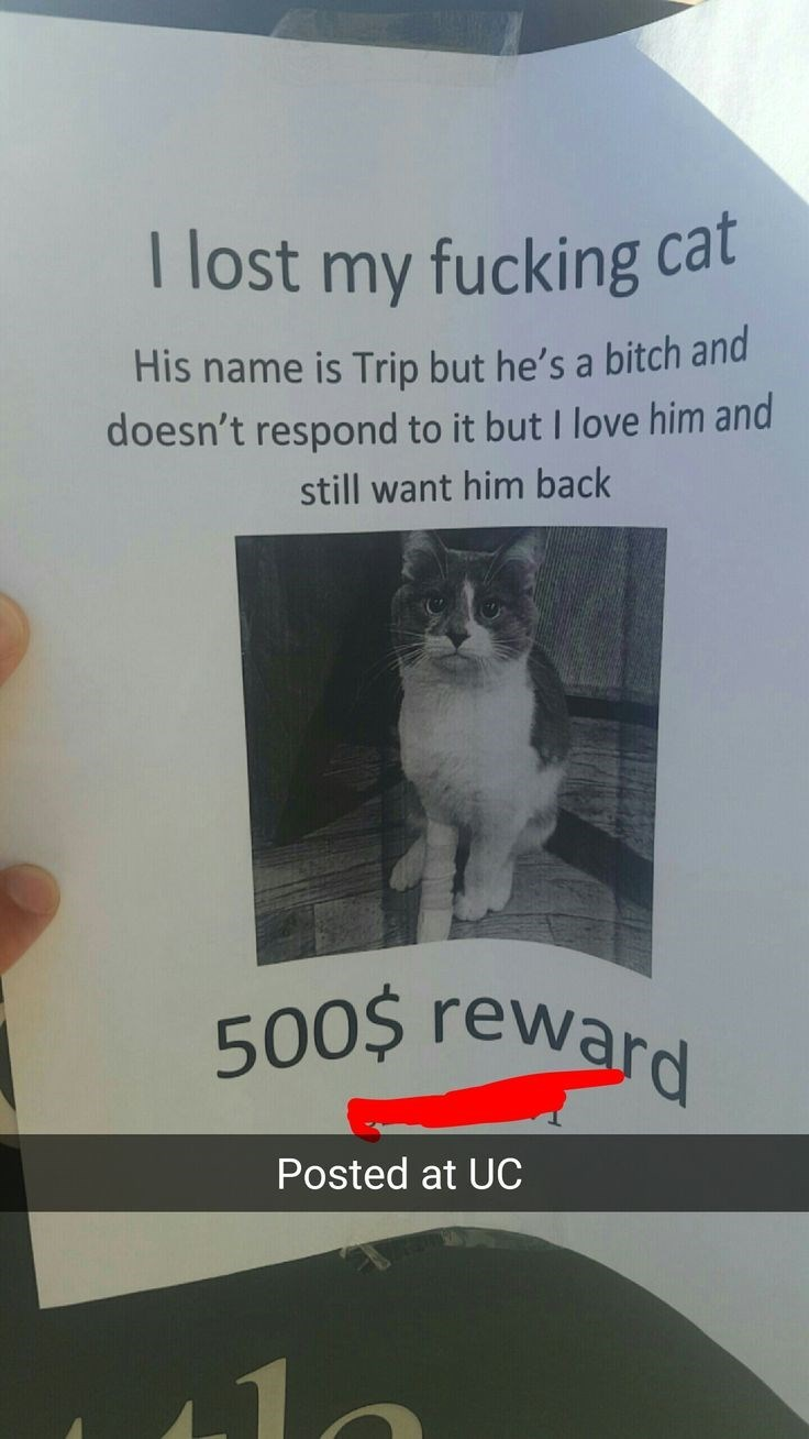 missing cat sign calling him a bitch but still wanting it back