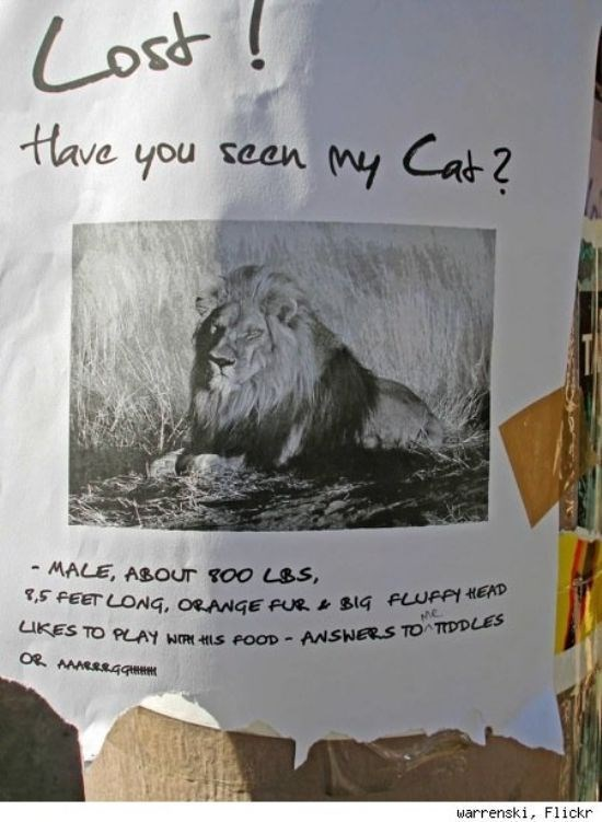 missing cat sign with a picture of a lion