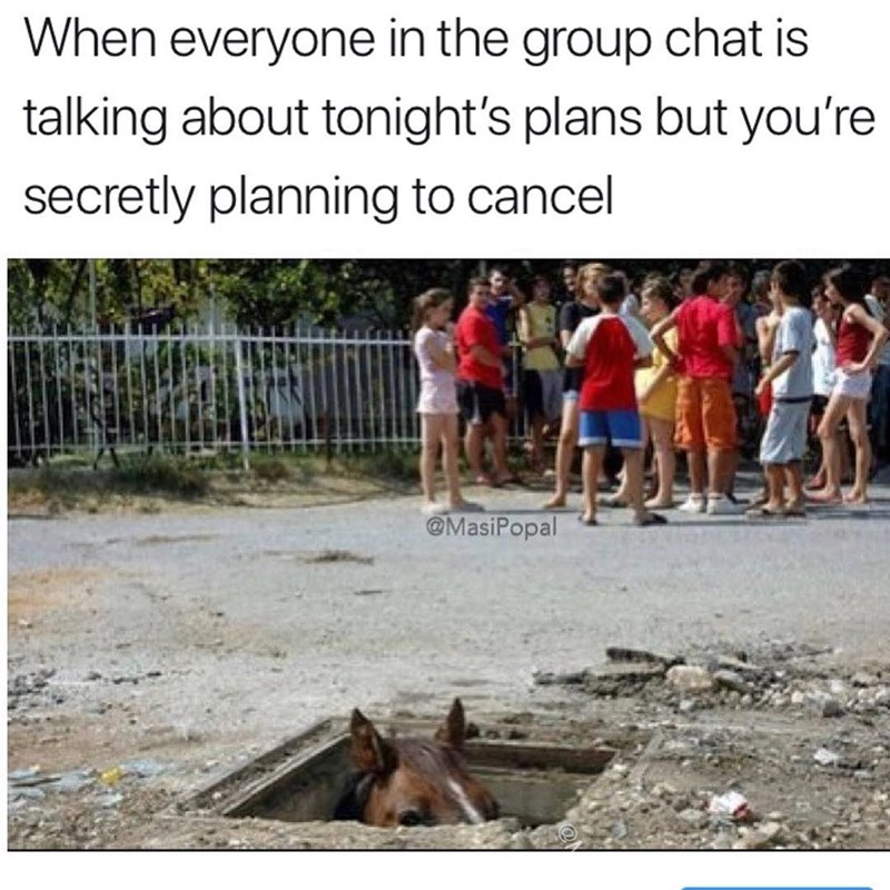 Funny meme about the group chat when you're not actually going to be around for plans, horse in a ditch surrounded by kids talking.