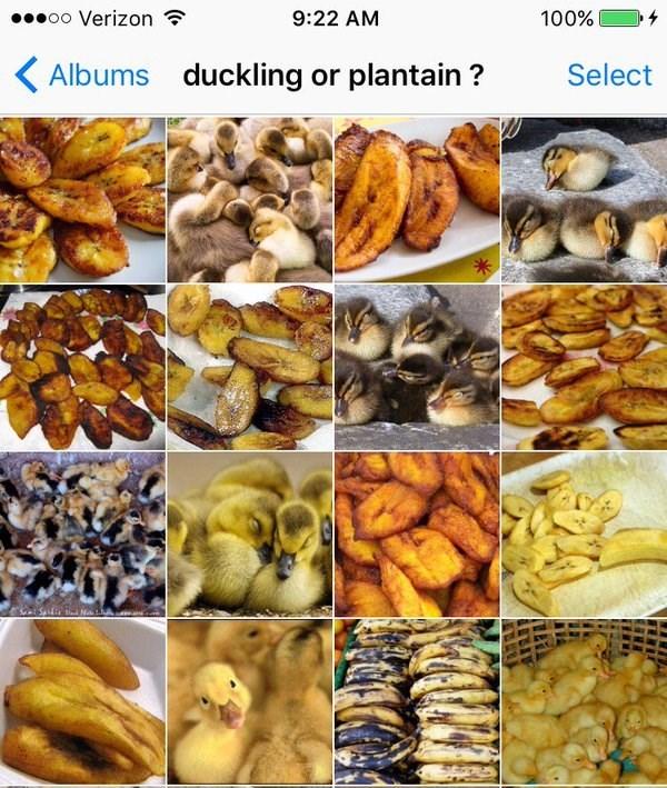Banana family - oo Verizon 9:22 AM 100% duckling or plantain? Albums Select
