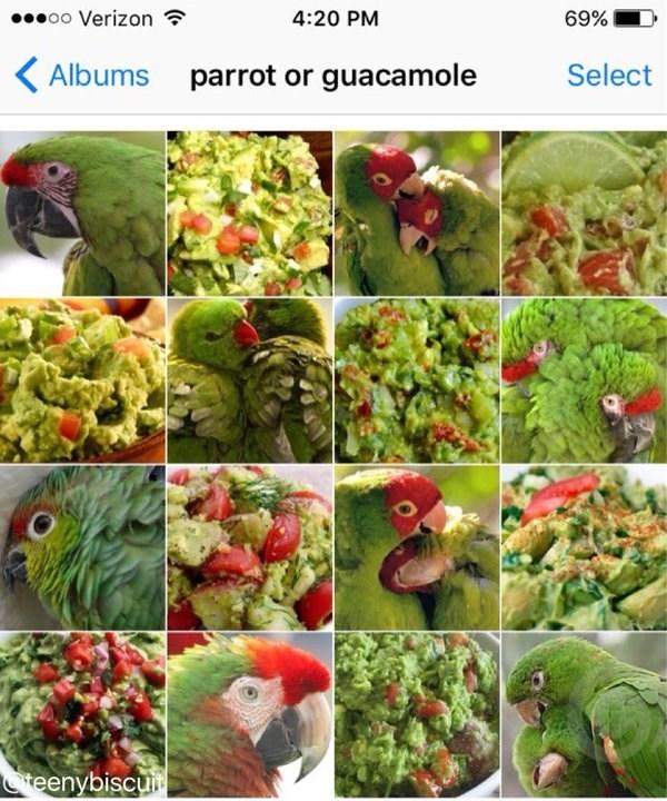 Bird - oo Verizon 4:20 PM 69% Select Albums parrot or guacamole teenybiscui