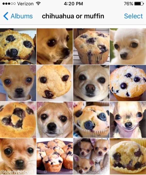 Dog - oo Verizon 4:20 PM 76% Albums chihuahua or muffin Select @teenybiscuit