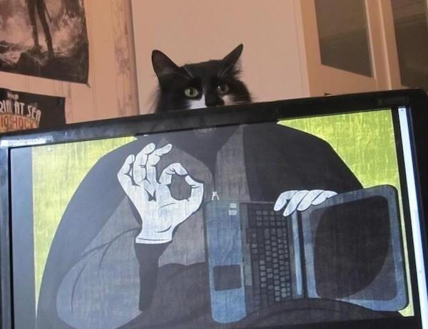 Cat - fAT SER 104OM