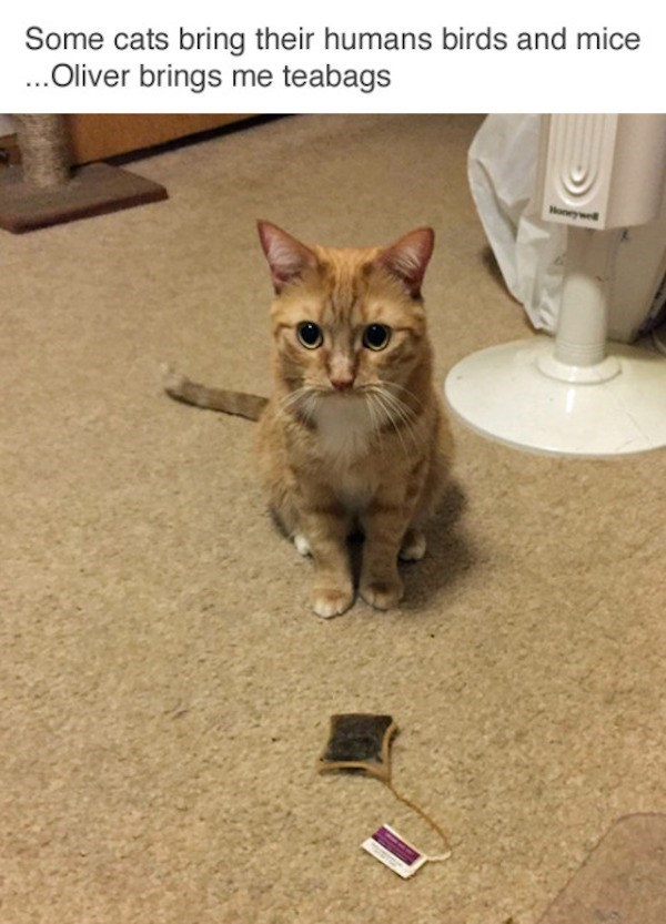 Cat - Some cats bring their humans birds and mice ...Oliver brings me teabags Woneywell