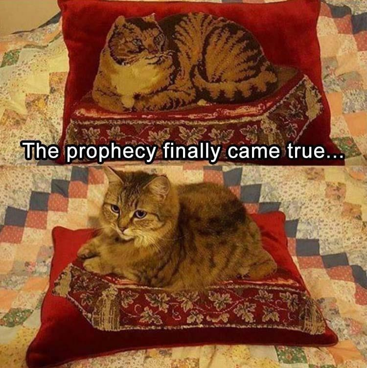 Cat - The prophecy finally came true...