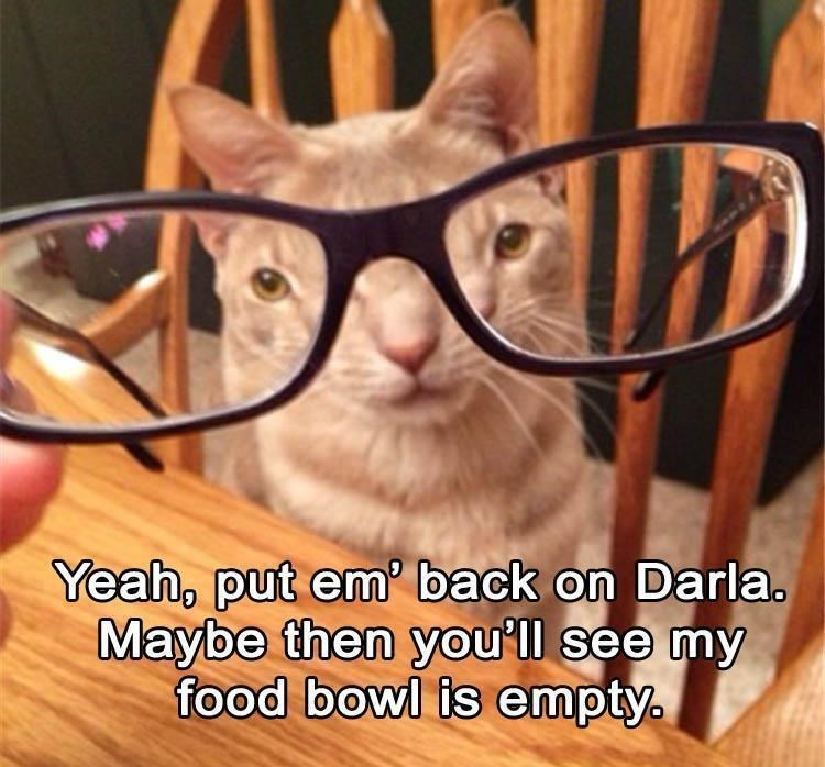Eyewear - Yeah, put em' back on Darla. Maybe then you'll see my food bowl is empty