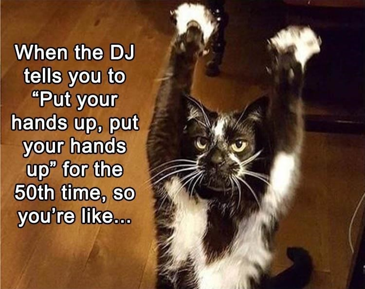 """Cat - When the DJ tells you to """"Put your hands up, put your hands upP for the 50th time, so you're like..."""