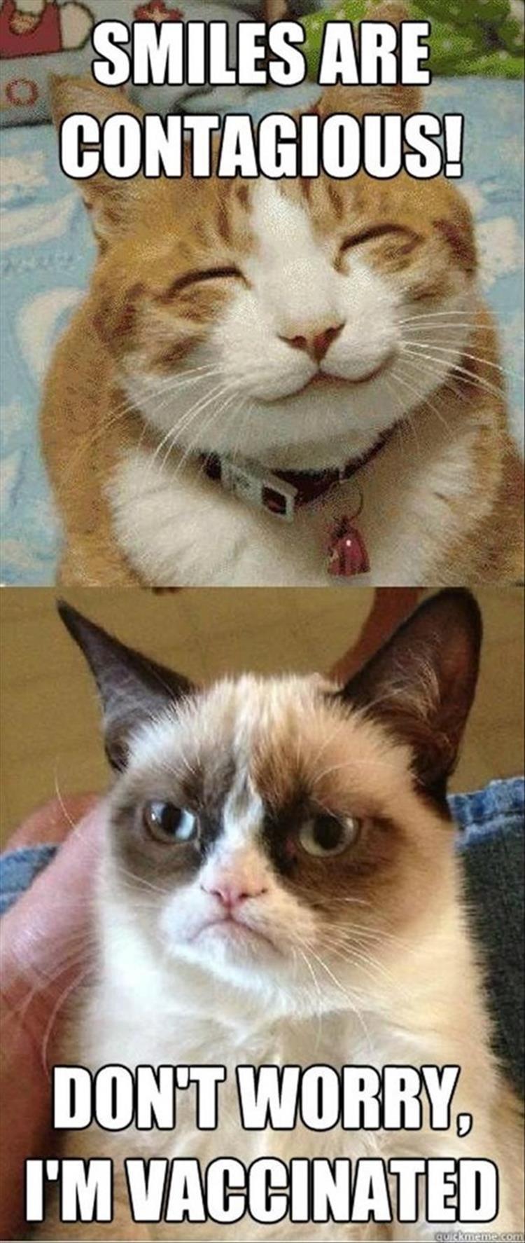 Cat - SMILES ARE CONTAGIOUS! DONT WORRY I'M VACCINATED quickmeme.com
