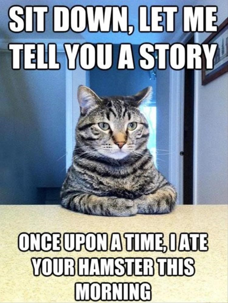 Cat - SIT DOWN, LET ME TELL YOU A STORY ONCEUPONATIME,IATE YOUR HAMSTER THIS MORNING