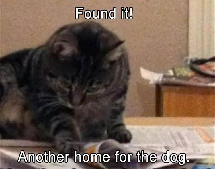 Cat - Found it! Another home for the dog.