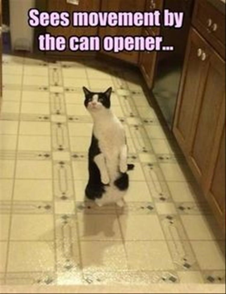 Cat - Sees movement by the can opener..