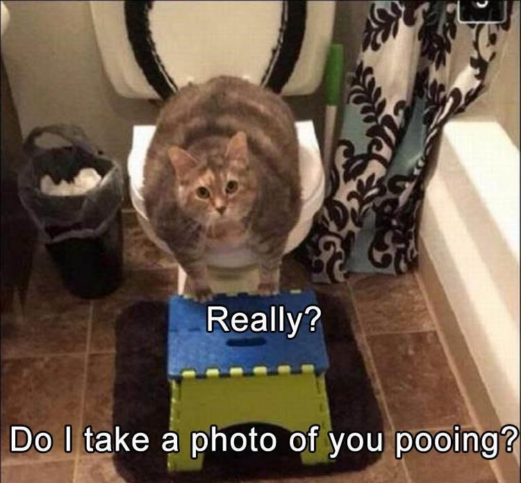 Cat - Really? Do I take a photo of you pooing?