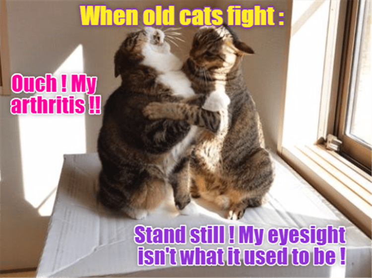 Cat - When old cats fight: Ouch! My arthritis!! Stand still! My eyesight isn't what it used to be!