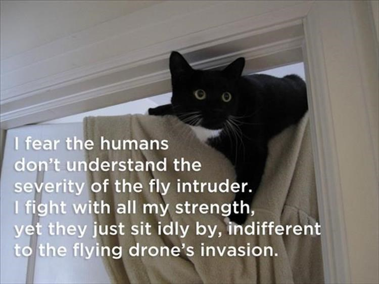Cat - I fear the humans don't understand the severity of the fly intruder. I fight with all my strength, yet they just sit idly by, indifferent to the flying drone's invasion.