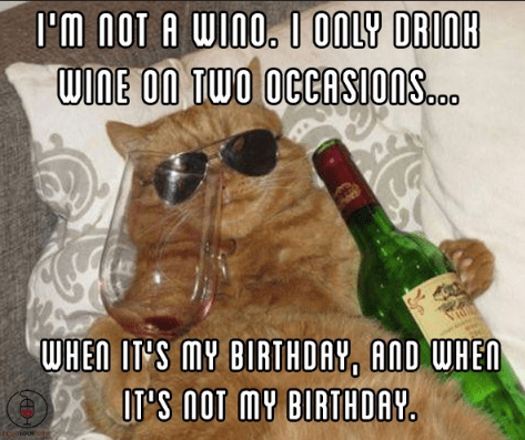 drinking meme about always being drunk with pic of cat in sunglasses holding a wine bottle