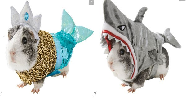 halloween customes for guinea pigs, guinea pigs in customes