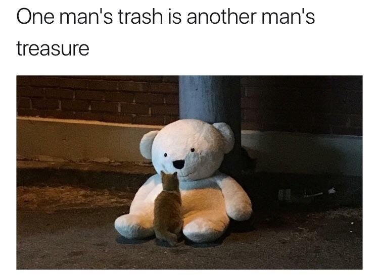 cute meme of a cat that found a large stuffed animal that had been thrown out.