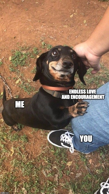 Happy dog meme