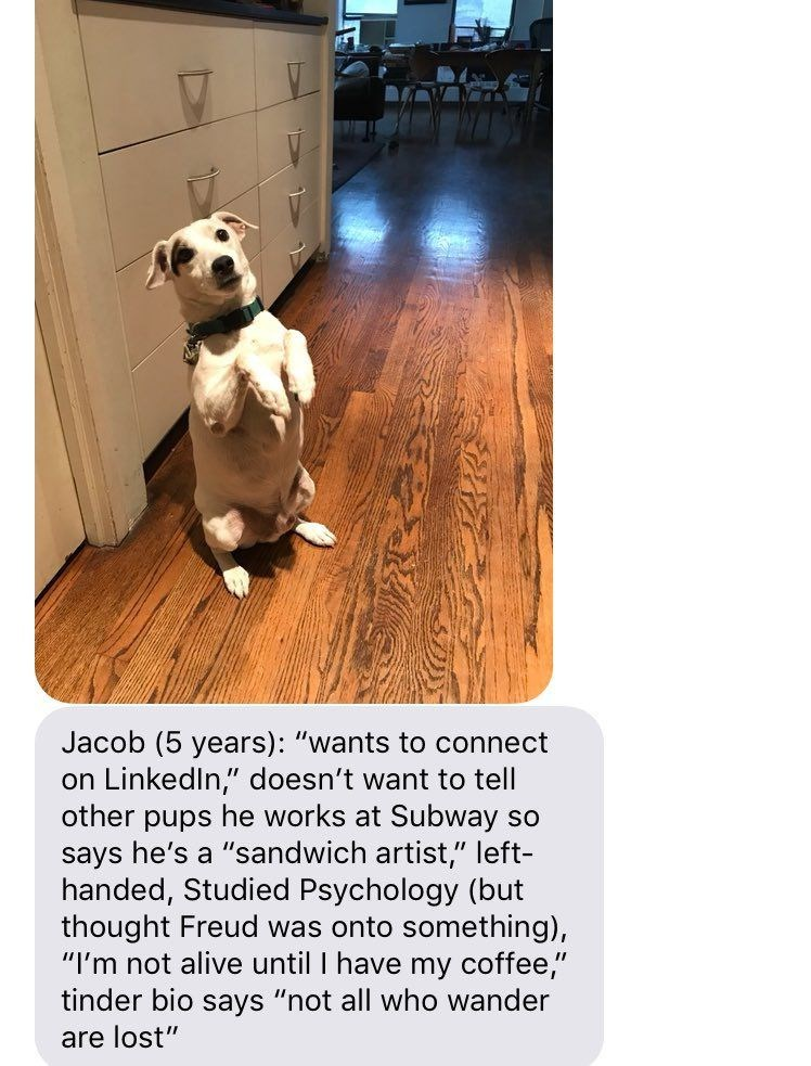 "Canidae - Jacob (5 years): ""wants to connect on LinkedIn,"" doesn't want to tell other pups he works at Subway so says he's a ""sandwich artist,"" left- handed, Studied Psychology (but thought Freud was onto something), ""I'm not alive until I have my coffee,"" tinder bio says ""not all who wander are lost"""