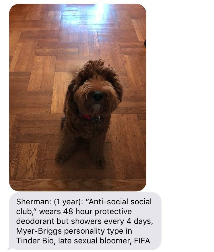 "Dog - Sherman: (1 year): ""Anti-social social club,"" wears 48 hour protective deodorant but showers every 4 days, Myer-Briggs personality type in Tinder Bio, late sexual bloomer, FIFA"
