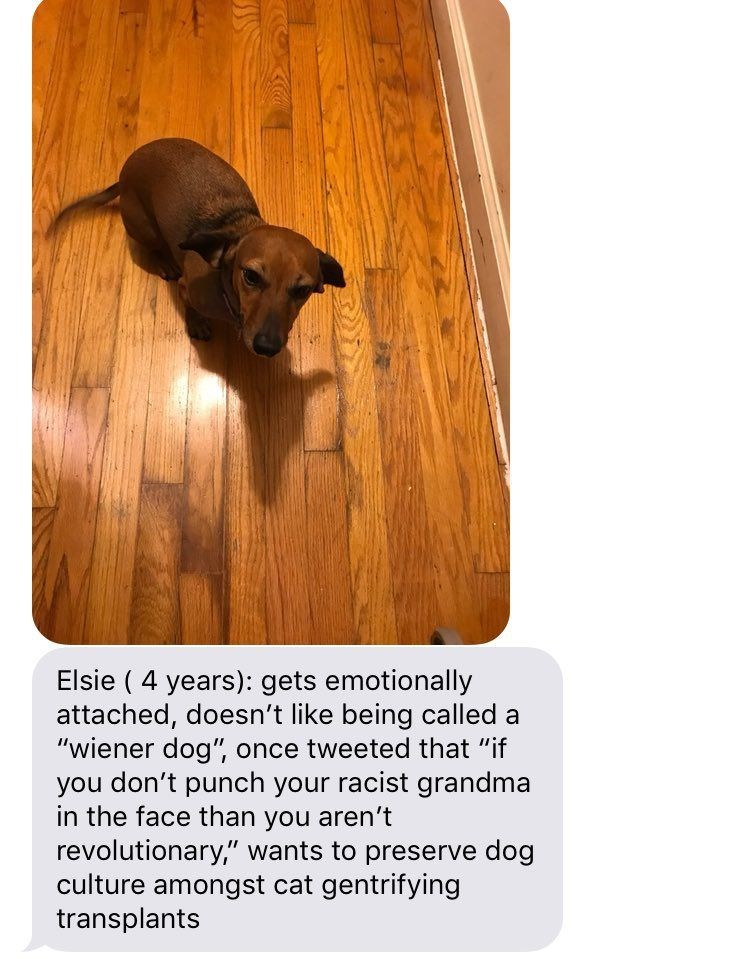 "Canidae - Elsie ( 4 years): gets emotionally attached, doesn't like being called a ""wiener dog"" once tweeted that ""if you don't punch your racist grandma in the face than you aren't revolutionary,"" wants to preserve dog culture amongst cat gentrifying transplants"
