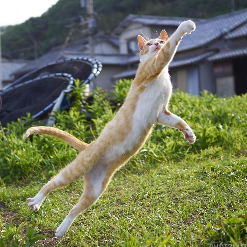 ninja cats - Jumping - PHOTO