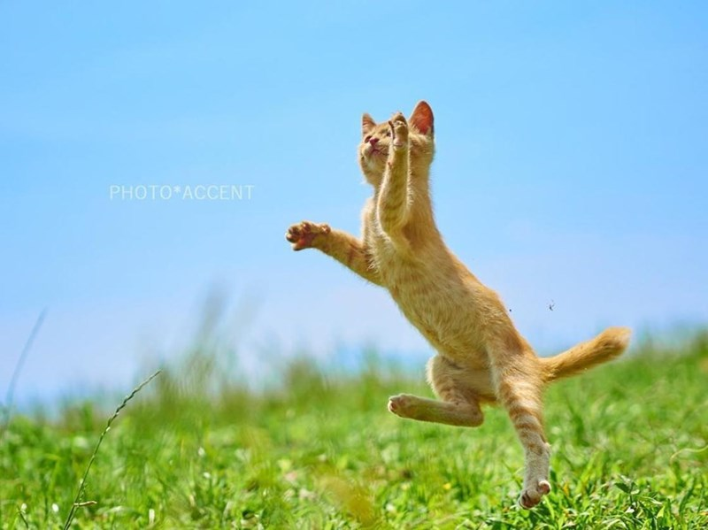 ninja cats - Jumping - PHOTO*ACCENT