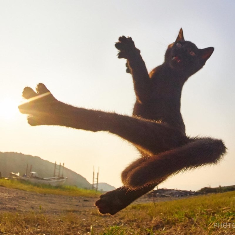 ninja cats - People in nature - PHOTO
