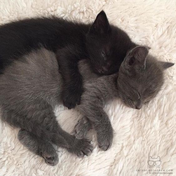 cats cuddling - Cat - CATSOFINSTAGRAM.COoM iCATSOFINSTAGRAM