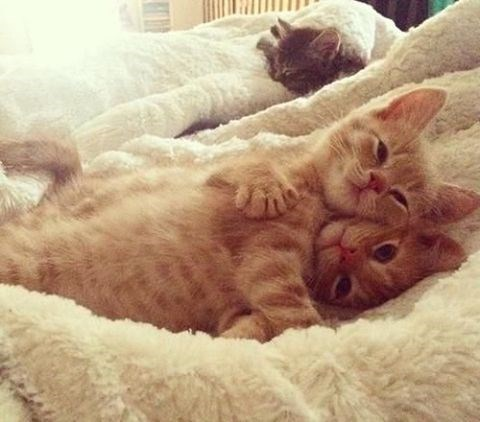 kittens cuddling up on the bed