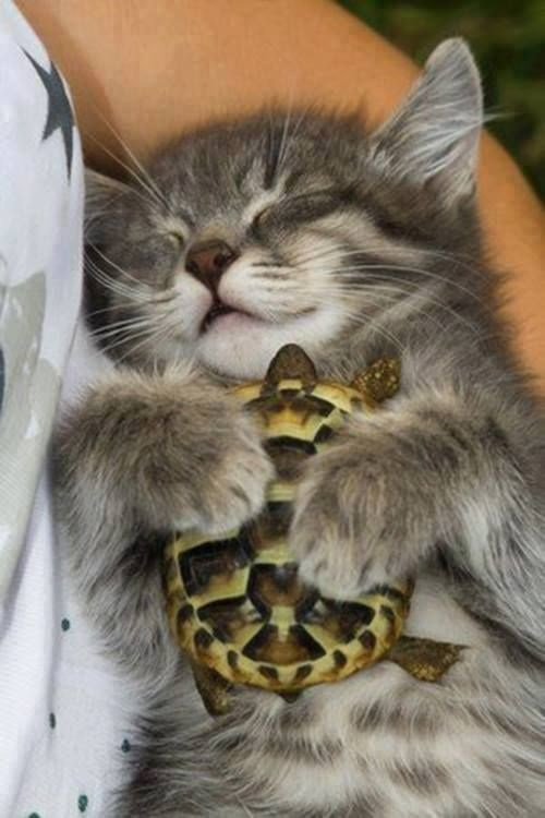 kitten cuddling with a turtle