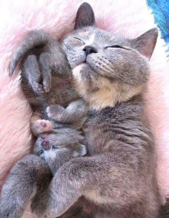 kitten cuddling with a cat