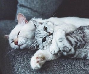 cat and kittens hugging and cuddling