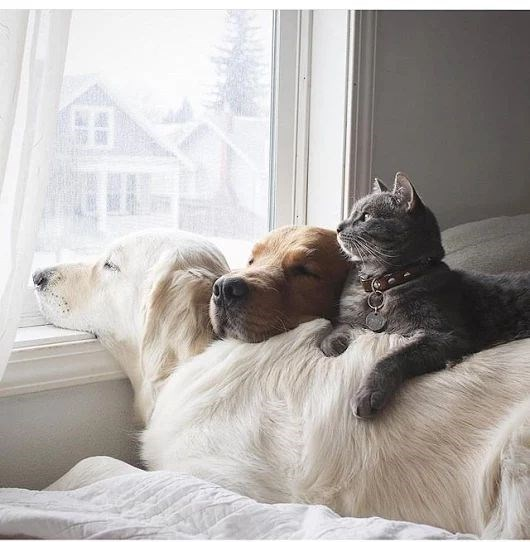 dogs and a cat snuggling up by the window