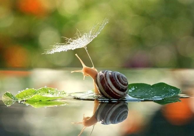 snails - Leaf