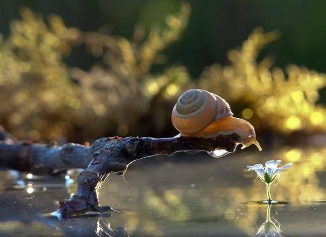 snails - Snail