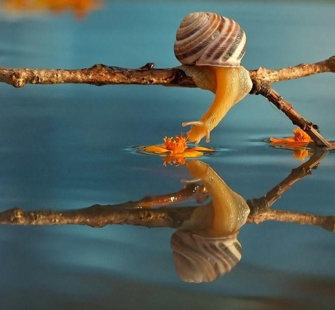 snails - Branch