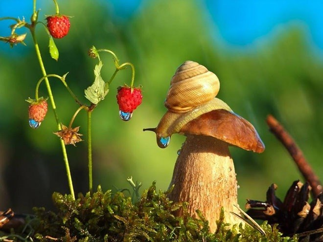 snails - Natural landscape