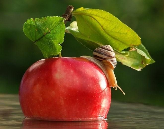 snails - Fruit